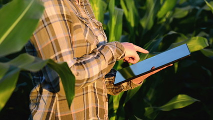 Woman agronomist using tablet computer in corn field