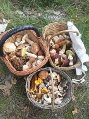 Cesti di funghi