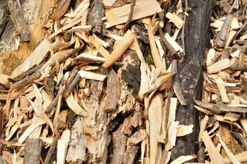 Organic background of woodchips