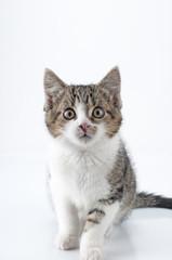 Kleines neugieriges Kätzchen