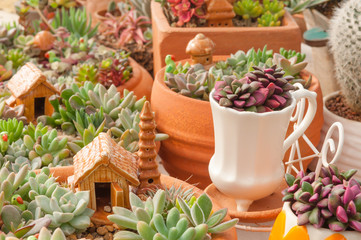 Decorating mini garden with Cactus