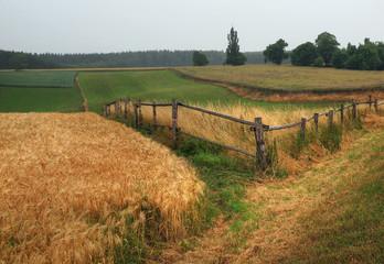 Wiese und Feld