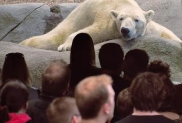 Un orso osserva un gruppo di persone davanti a lui