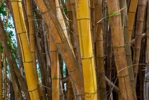 In de dag Bamboo Yellow Bamboo Forest