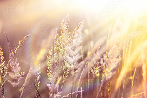 Sunset in a field of high grass