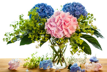 blue and pink hydrangea