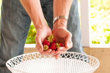 strawberries in palms of the hands