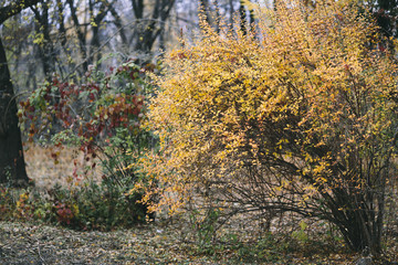 yellow and red tree in the park