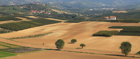 Panoramic view on vineyards and fields in Italy.