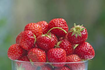 bowl of summer strawberries in the garden