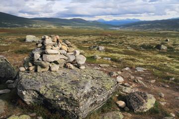 parco nazionale dovrefjell norvegia