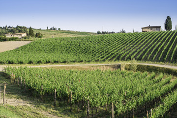 Vineyards in Tuscany
