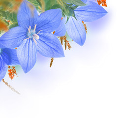 Bouquet of bells, floral background