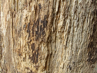 rotten wood detail background texture