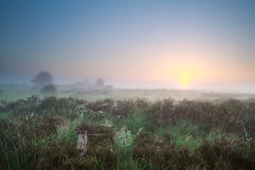 beautiful misty sunrise over marsh