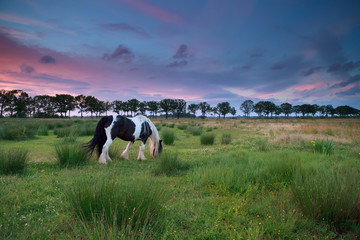 horse graze on pasture at sunset