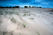 canvas print picture - sand dunes in evening