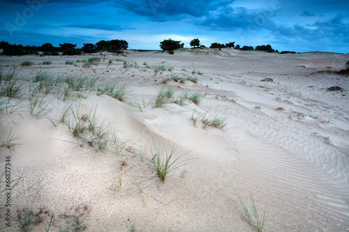 canvas print picture sand dunes in evening