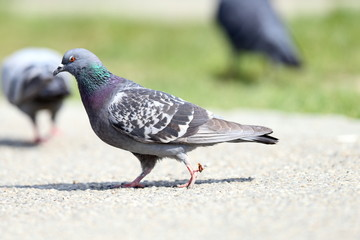 pigeon on alley