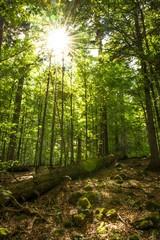 Sonnenschein durch die Baumkronen