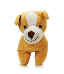 toy dog isolated on a white background