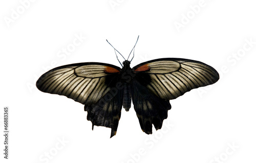 Foto op Plexiglas Vlinder butterfly