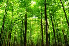 "Постер, картина, фотообои "" forest"""