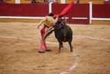 Torero in action