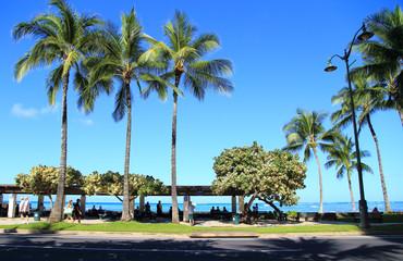 ヤシの木と青空とワイキキビーチ