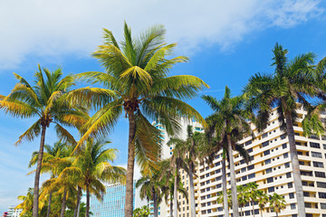 Palms and modern buildings of Miami Beach, Florida