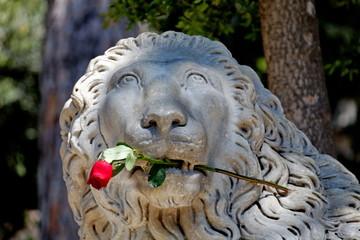 Lio de pierre, une rose entre les dents