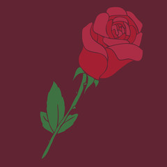 red rose, vector illustration, hand drawn