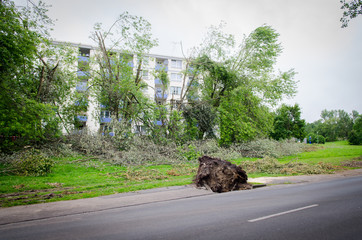 entwurzelte bäume an der straße
