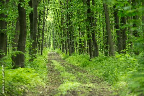 Aluminium Bossen forest