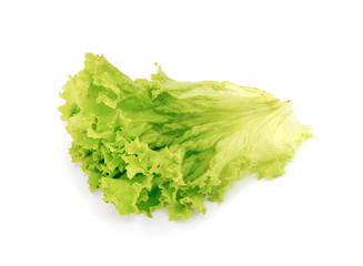 Fresh green leaf lettuce on white background