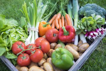 Gros plan panier de légumes
