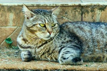Cute cat relaxing on the doormat