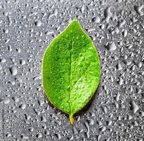 Green leaf lying on scratched metal - 66896364