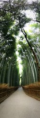 A walk in the bamboo forest 2