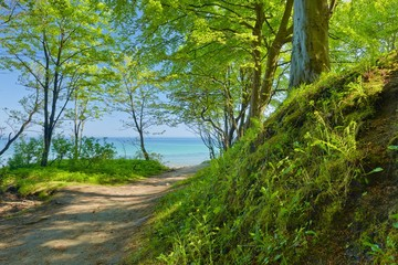 Way to sea by green deciduous forest. Green nature.