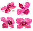Collections of Orchid flowers isolated on white background