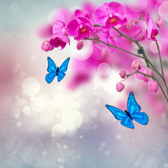 violet orchid flowers with butterflies