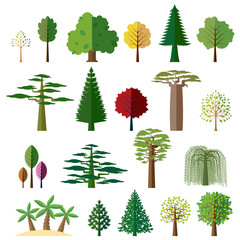 Trees from different regions of the world