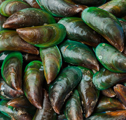 Asian green mussel was displayed and sale in Thailand  market
