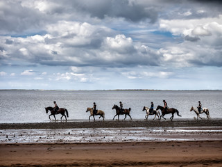 Group riding horses in the wadden sea