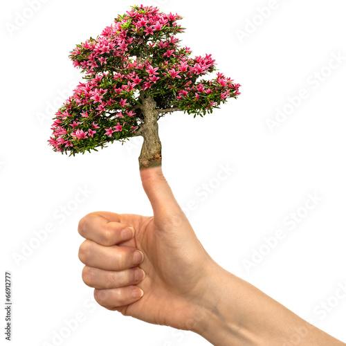 Hand mit blühender Azalee auf dem Daumen