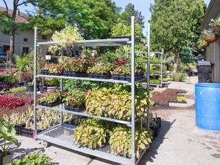 Bedding plants in Nursery