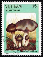 Postage stamp Vietnam 1987 Grey Knight, Mushroom