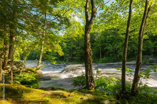 rzeka-w-lesie