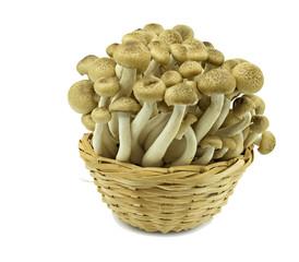 Enokitake (Shimeji) mushrooms on white background